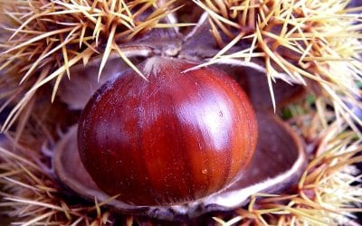 Chestnuts: P.D.O. and P.G.I. food products