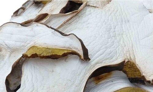 dried italian mushroom