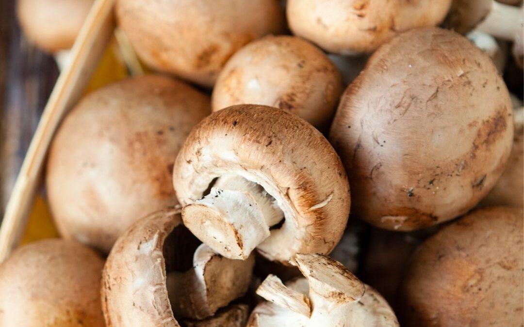 North of Italy Mushrooms