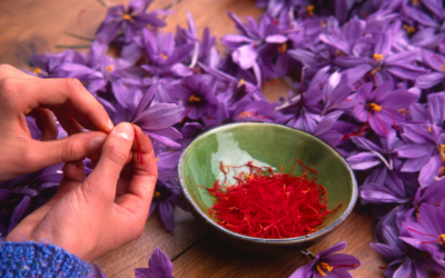 Why Saffron is Expesive